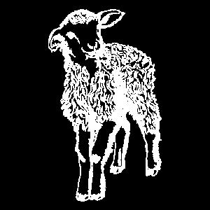sheep drawing